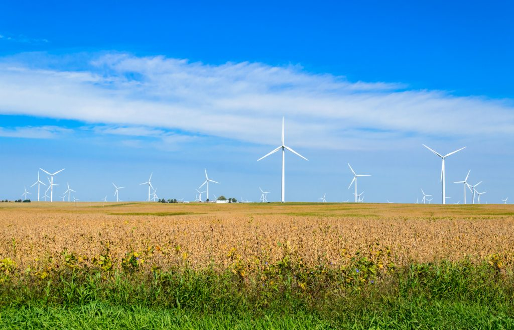 A large grouping of Wind turbines generating electricity for surrounding towns in Central Illinois. The wind turbines are located on the farmland. In the foreground of the color photograph is a large soybean field ready for harvest. In the background is blue sky and clouds.